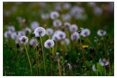 2012-printemps-2831