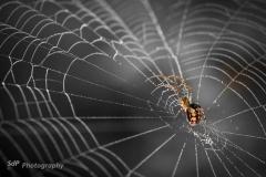 Champignons et araignées